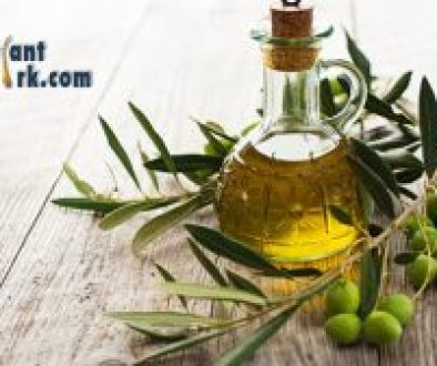 Will Applying Olive Oil to My Scalp Stop Hair Loss?