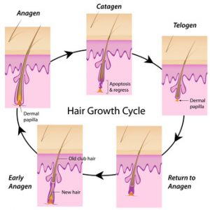 Can A Graft Still Be In The Resting Phase At 5 Months After A Hair Transplant?